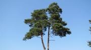 Deux arbres en pleine conversation