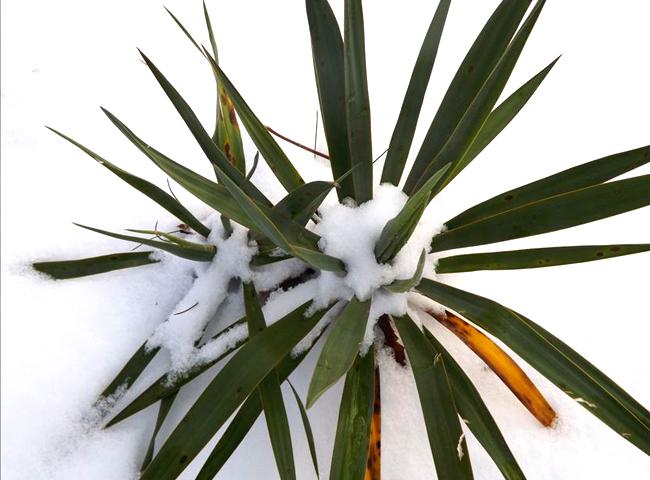 Palmier aux sports d\'hiver