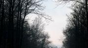 Une percée dans la forêt