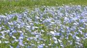 glamping-fleurs-bleues