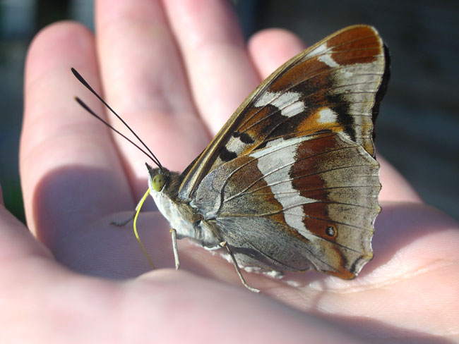 glamping-papillon