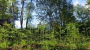 Nature attachante