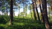 Nature verticale