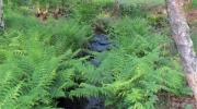 Ruisseau indomptable