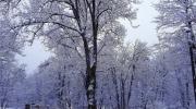 Majesté des grands arbres