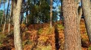 L\'automne est là