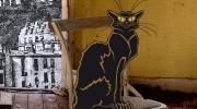 Que fait ce chat noir ?