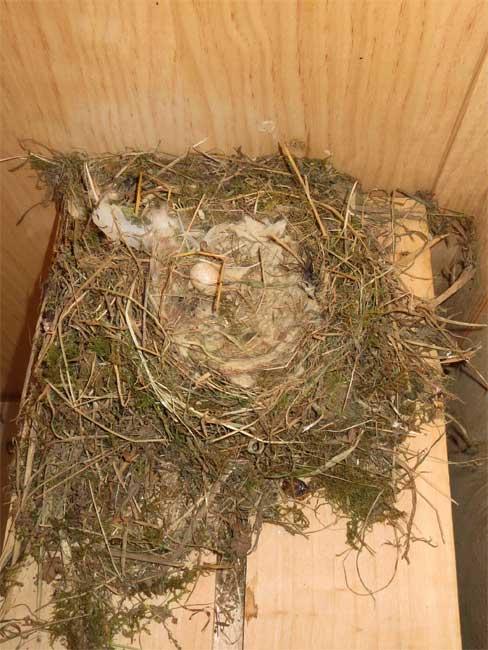 Terminé, tout le monde est parti, le nid est vide, excepté un petit œuf abandonné