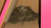 Le nid est au fond d\'une armoire