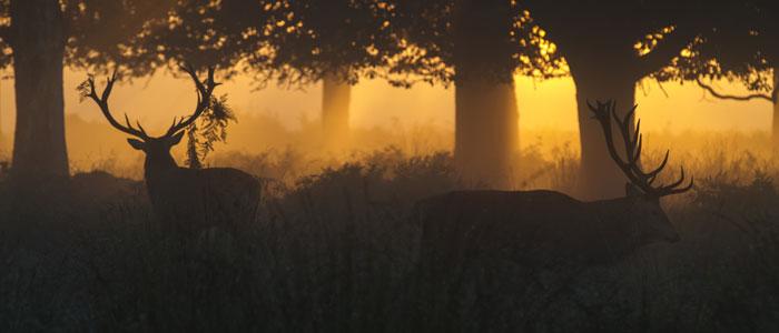 cerfs Dordogne-Périgord