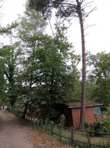Une cabane étouffée sous un châtaignier