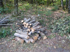 Gasp...voilà du bois