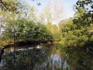 Un étang paisible