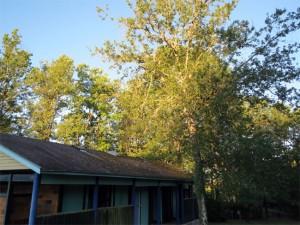 Le toit avant nettoyage