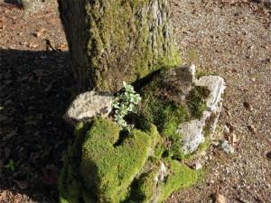 Une petite composition posée au pied d'un arbre