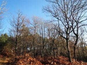 Une jeune forêt en pleine constitution