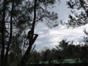 Hop, le tronc est raccourci... :-)