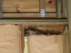 Le nid est posé sur une bonne couche de laine de verre