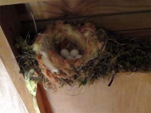 Petit aperçu des œufs pris la semaine dernière