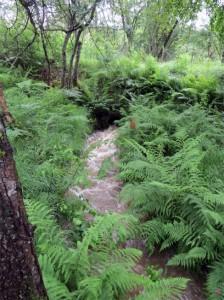 Le ruisseau entre dans le village par cette buse