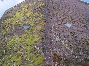 Mousses et lichen sont partout