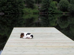 En tout cas, Franky a tout de suite adopté le nouveau ponton