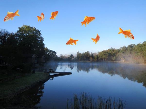 Vive les poissons volants