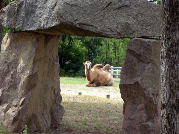 Un Chameau en Dordogne