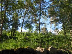 Mon bureau en Dordogne