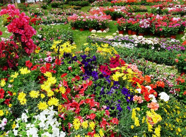 Les floralies de Saint Jean de Côle