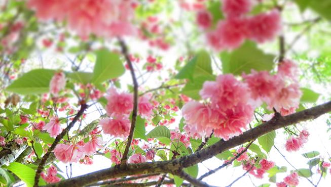 printemps camping nature dordogne