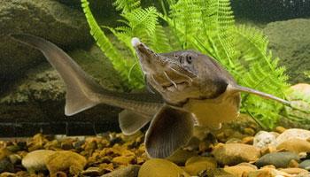 Aquarium Dordogne-Périgord