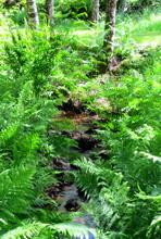 ruisseau - Parenthèses imaginaires