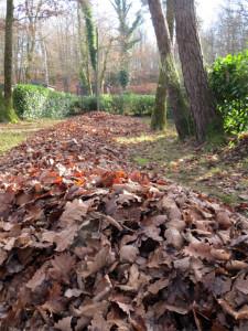 Feuilles, feuilles, feuilles...