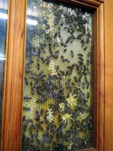 Les abeilles s'agitent