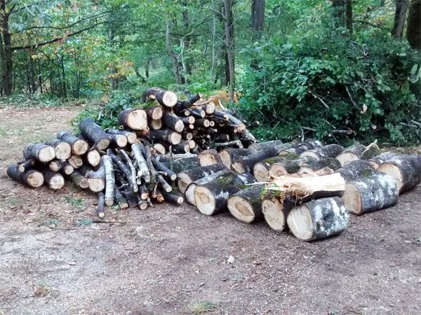Les arbres sont rangés