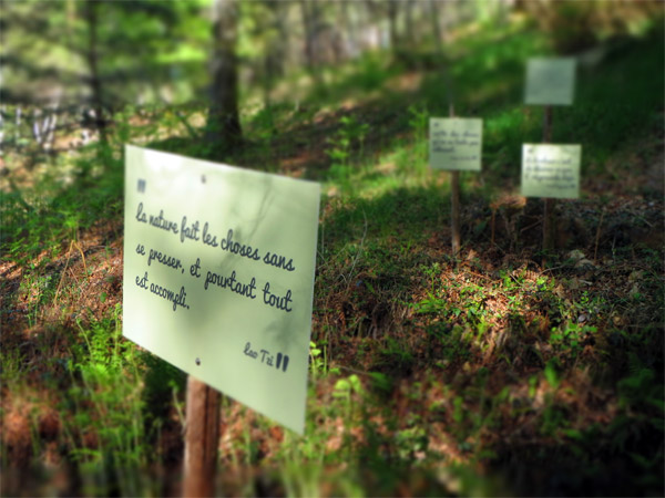 Forêt de citation