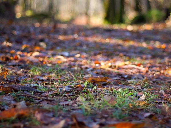 Parterre de feuilles à l'allée des celtes