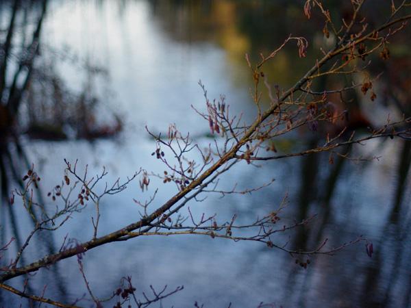 Rameau au bord de l'étang