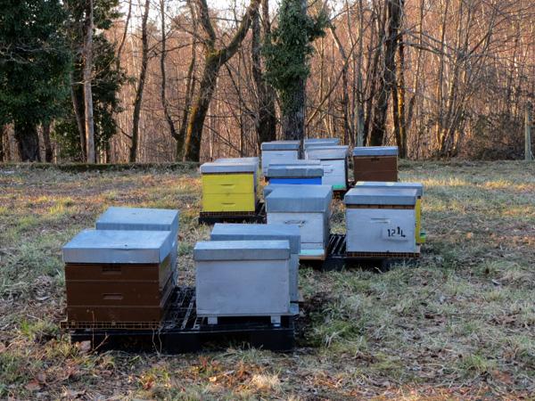 Une partie des ruches