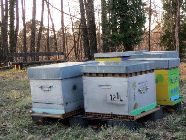 Les ruches sont regroupées par palette