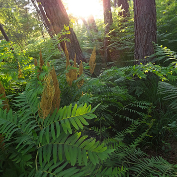 camping-nature-osmonde-dordogne