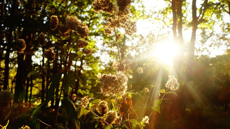camping-nature-septembre-aquitaine
