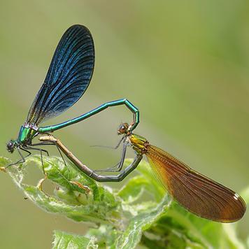 libellule-camping-nature-dordogne