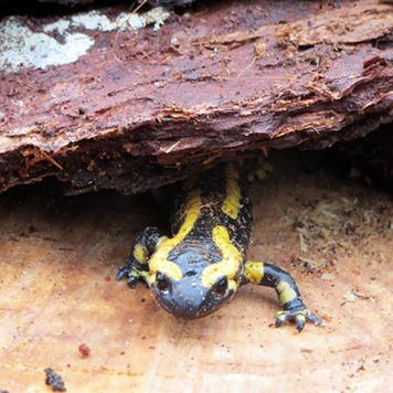 salamandre-camping-dordogne