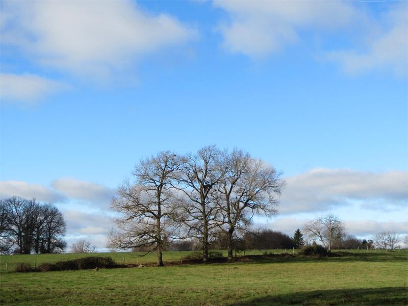 3 arbres en Périgord vert