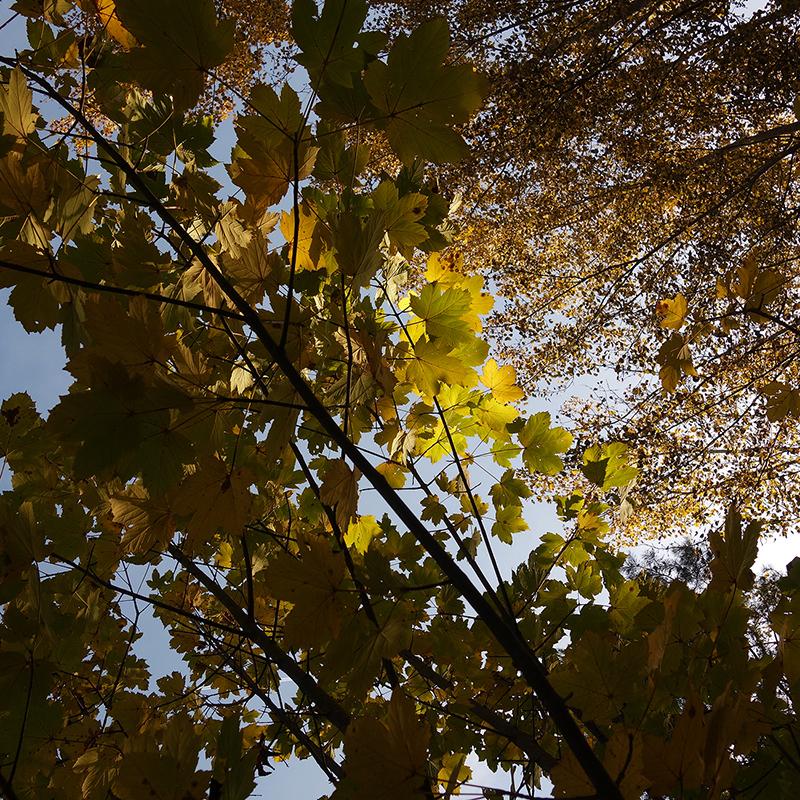 Dordogne-Périgord, c'est de l'or.
