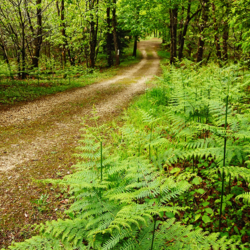 camping-randonnee-jogging- dordogne-perigord-aquitaine.pg